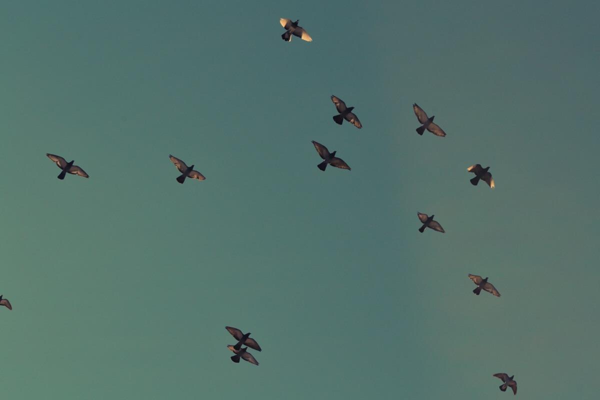 Vögel fliegen am Himmel