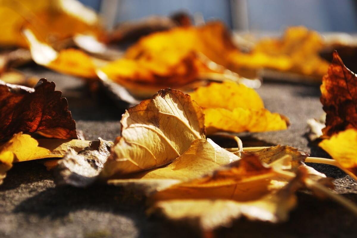 Gold-gelbes Herbstlaub auf dem Boden