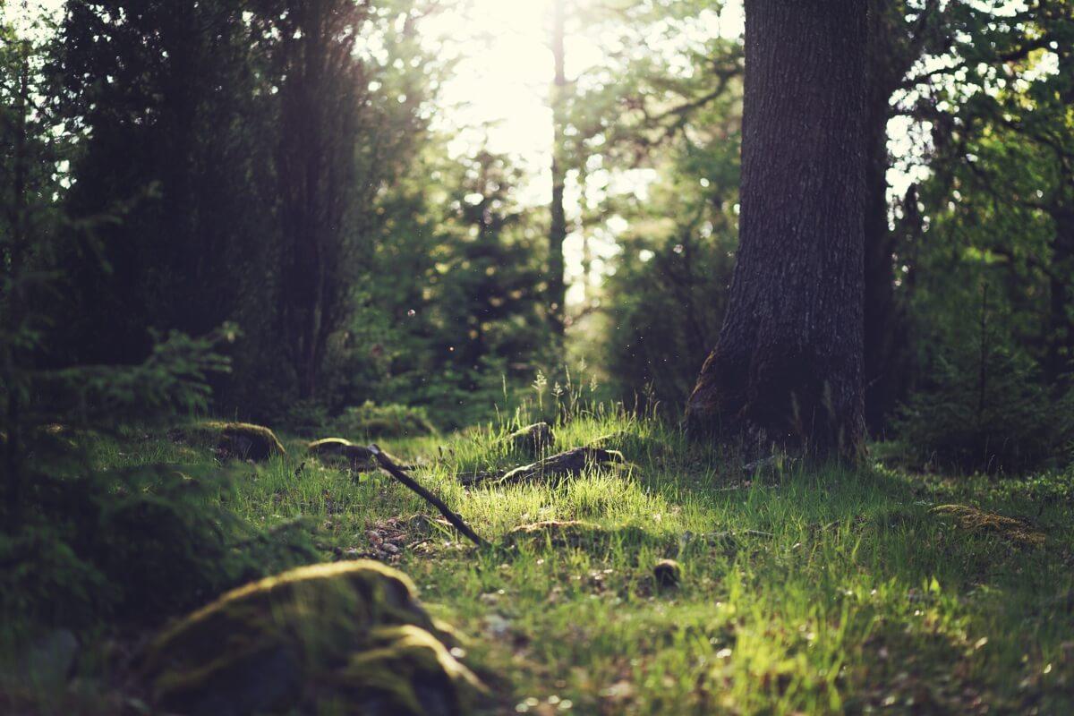 Foto von einem Waldstück im Sonnenschein