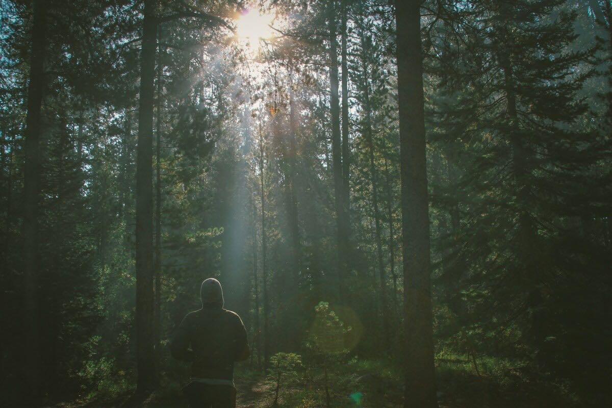 Ein Jogger läuft im Gegenlicht durch einen Wald
